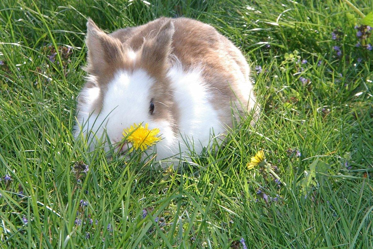 seriefigur netflix kanin